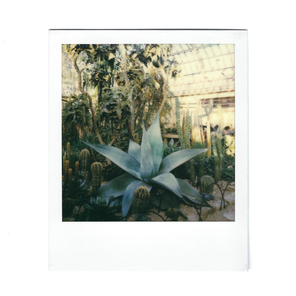 agave-plant-polaroid.jpg