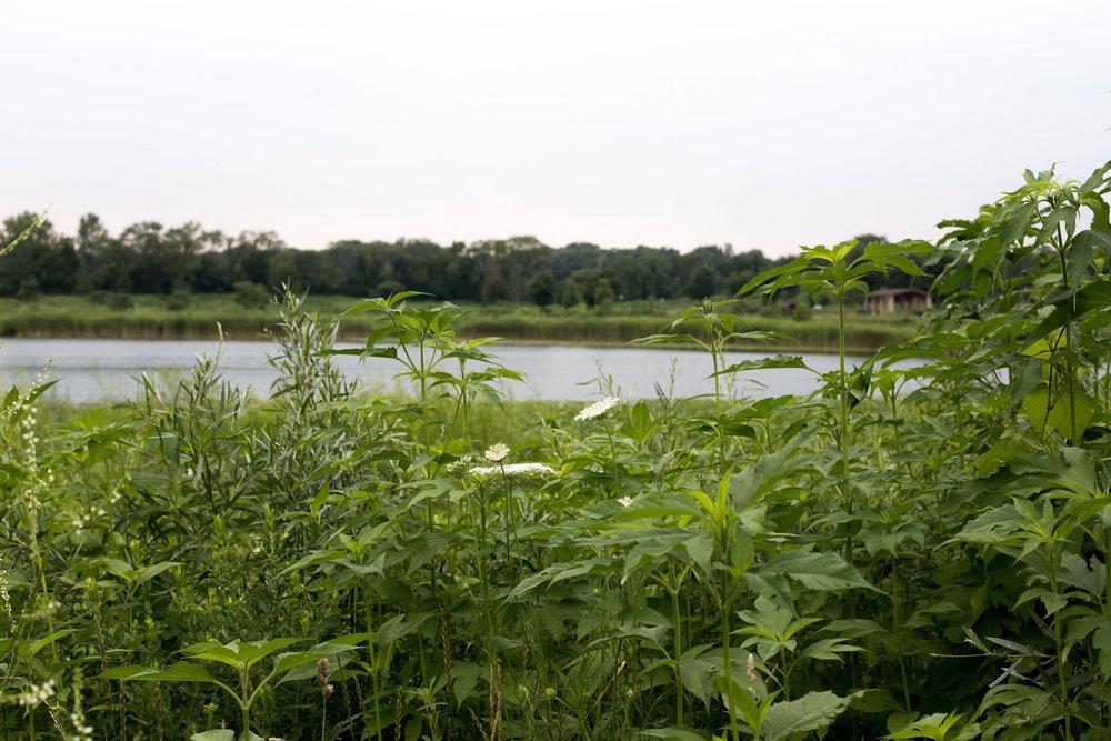 plants and lake.jpg