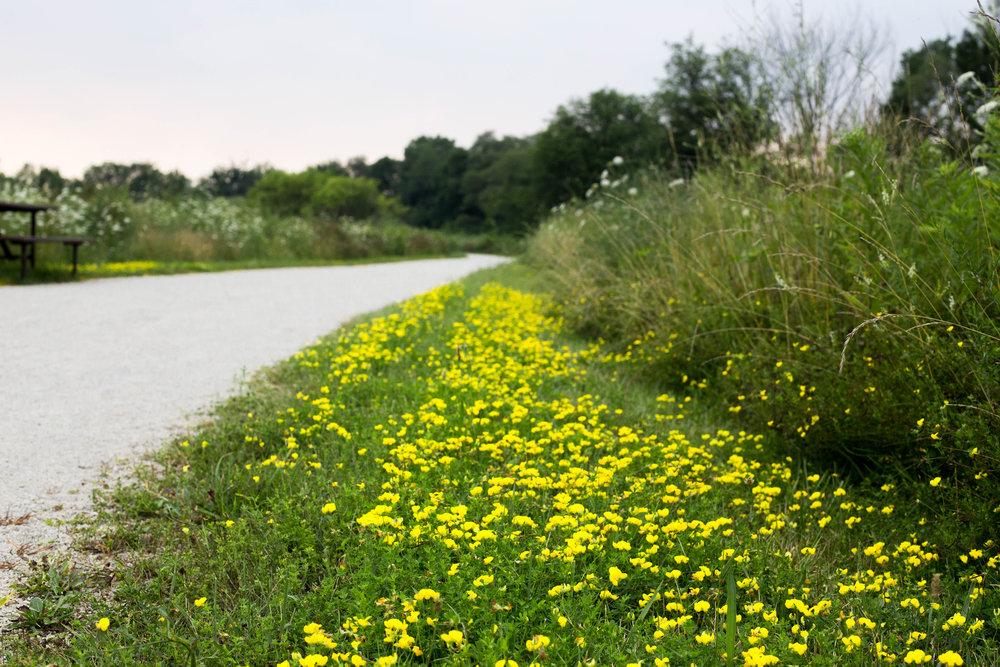 yellow path.jpg