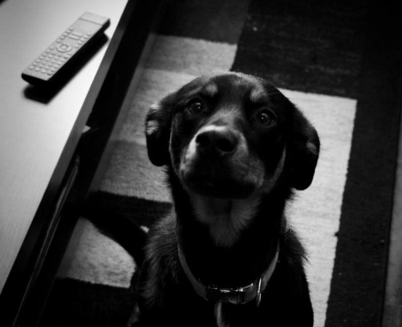 Marlee (Marls) - Brew Dog - Love
