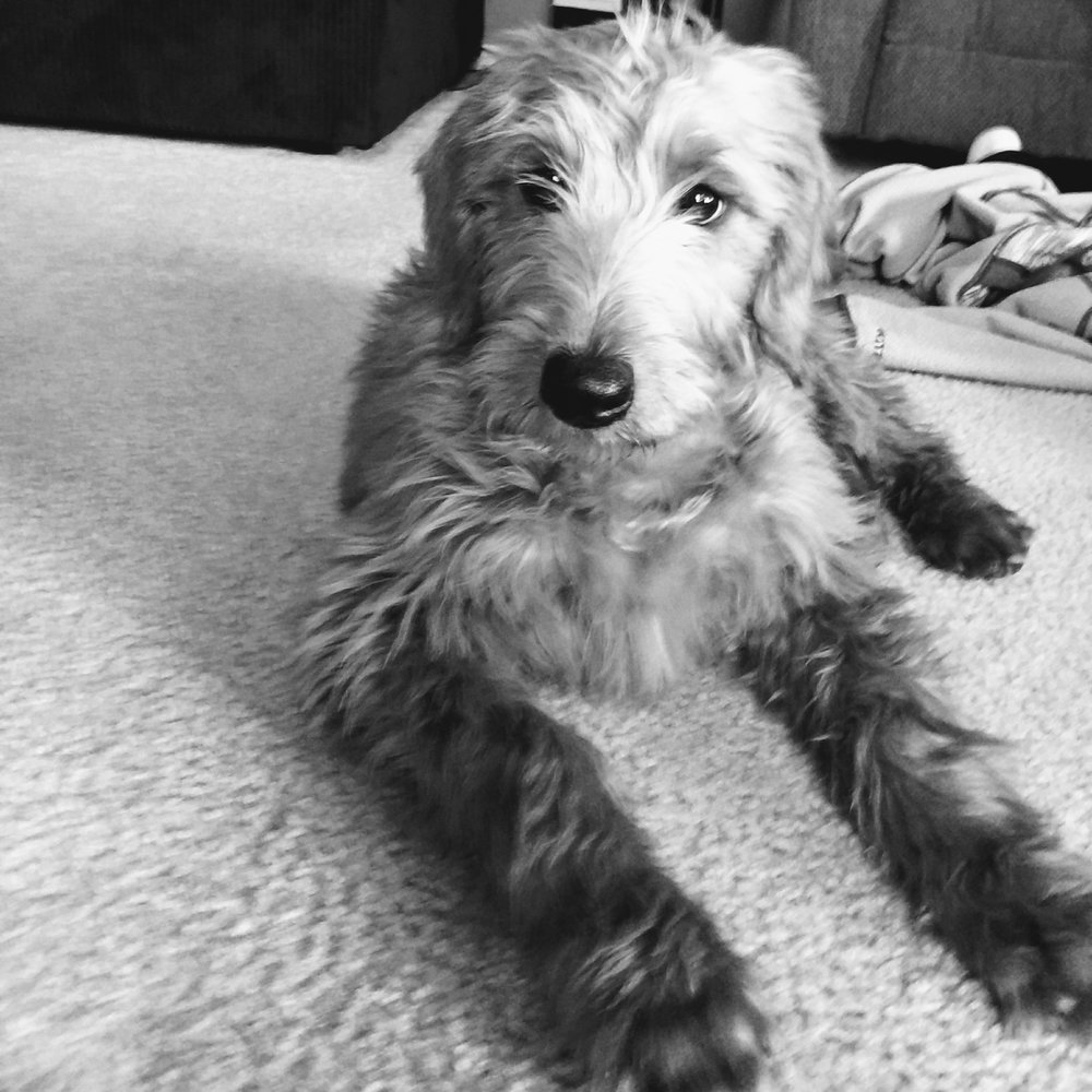 Lola Bramwell - Brew Dog -  Snuggles