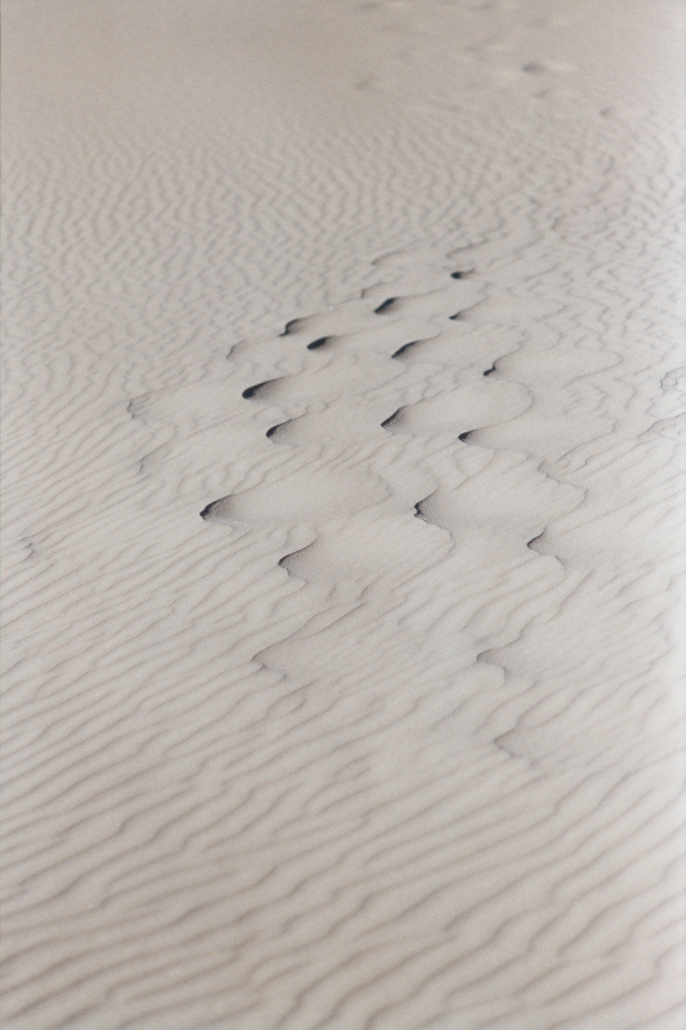 THE SAND IS A FORCE TO RECKON WITH - SAND OMINOUS, FOREBODING CREATURES OF STONE IMBIBED BY THE HAUNTING DELIBERATION OF TIME, AND WAVES. WAVES CRASH. SAND DUNES. AND THE STING WILL BE ONE YOU WON'T FORGET IN A DESERT STORM.  -