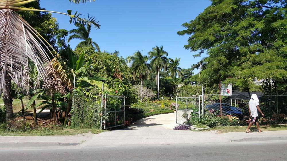 WWW_HannahBaker_JamaicaFenceManWalking.jpg