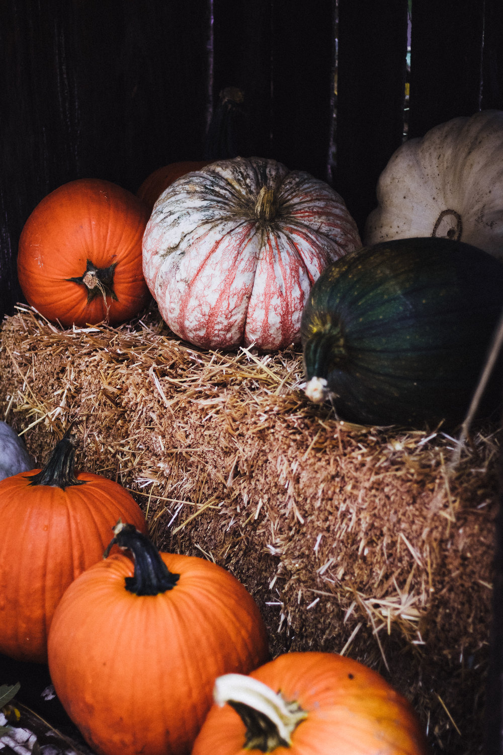 PBD Pumpkin Patch-8.jpg