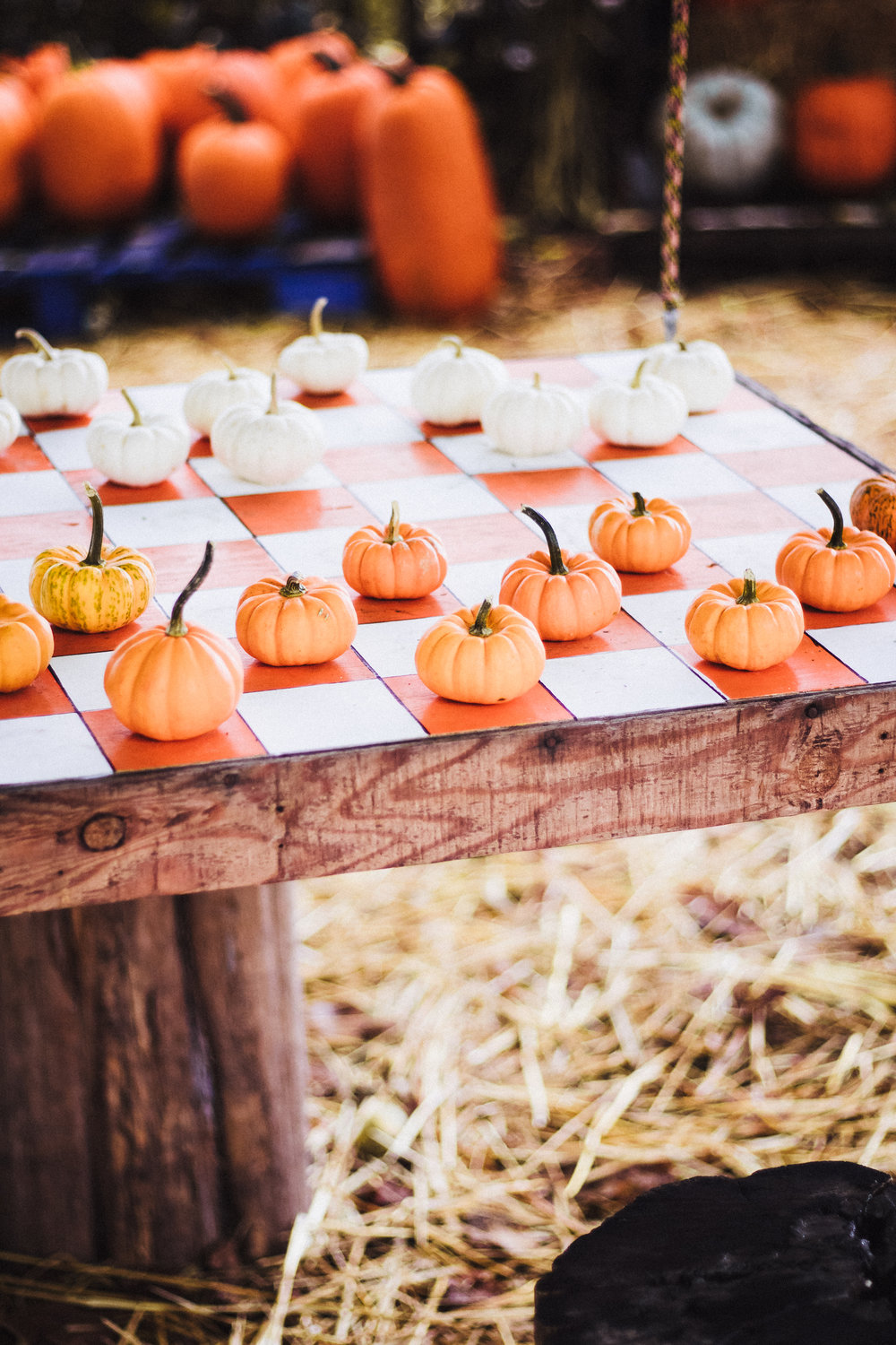 PBD Pumpkin Patch-13.jpg
