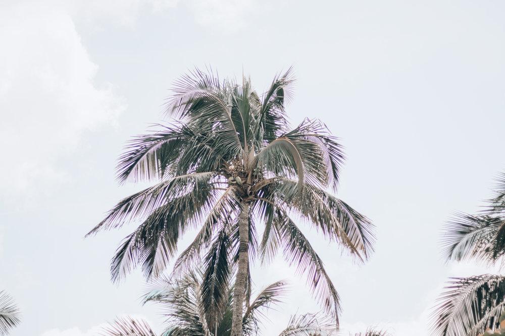 Florida-16.jpg