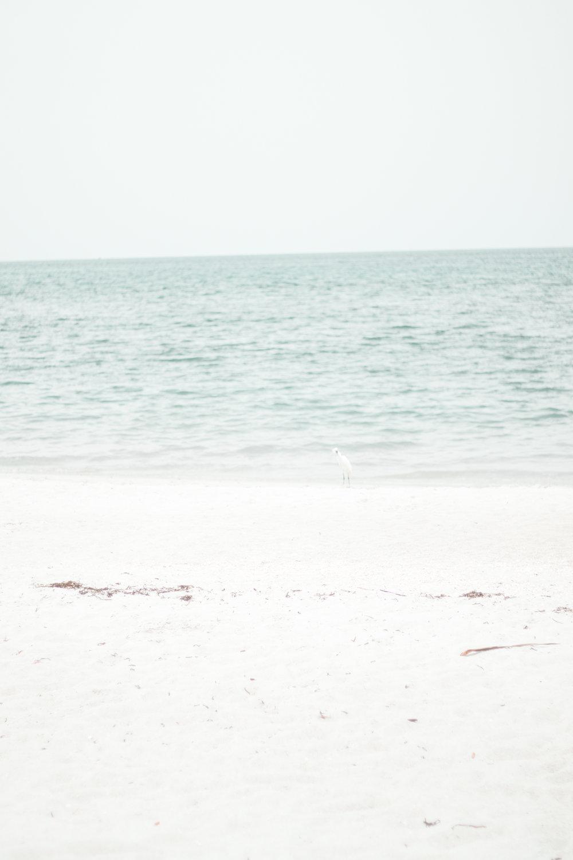 Florida-20.jpg