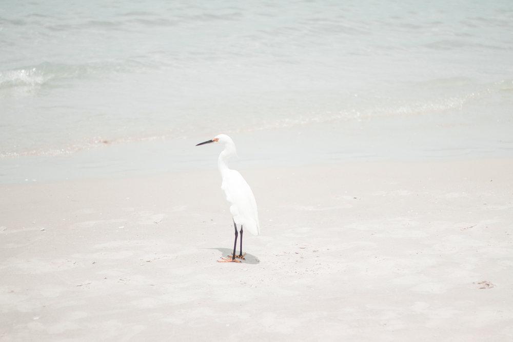 Florida-21.jpg