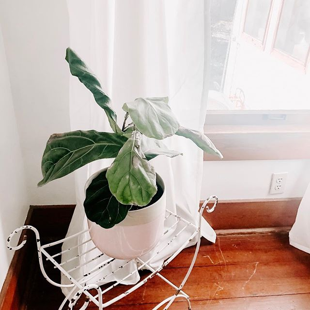 Happy freaking Monday friends! What are you excited about this week? . Side note: send my fiddle leaf all the positive vibes it's dying a slow painful death over here 🥴