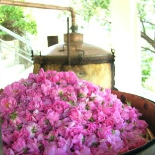 rose distillation2.jpg