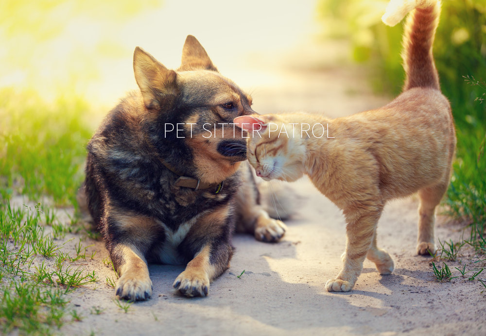 For a loving pet care time give us call today! - Insured & Bonded
