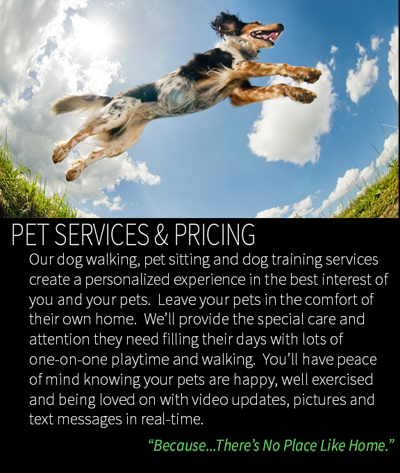 Pet Services Page- Pet Sitting, Dog Walking & Dog Training Overview.jpg