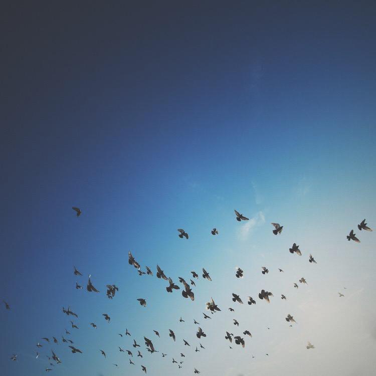 flockweb.JPG