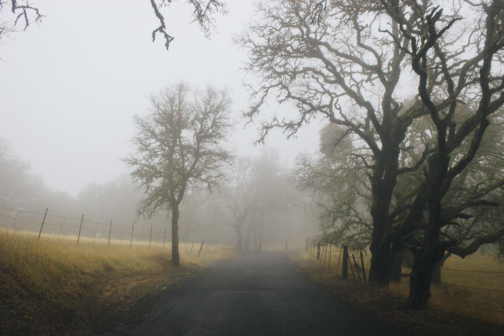 foggyday-3.jpg