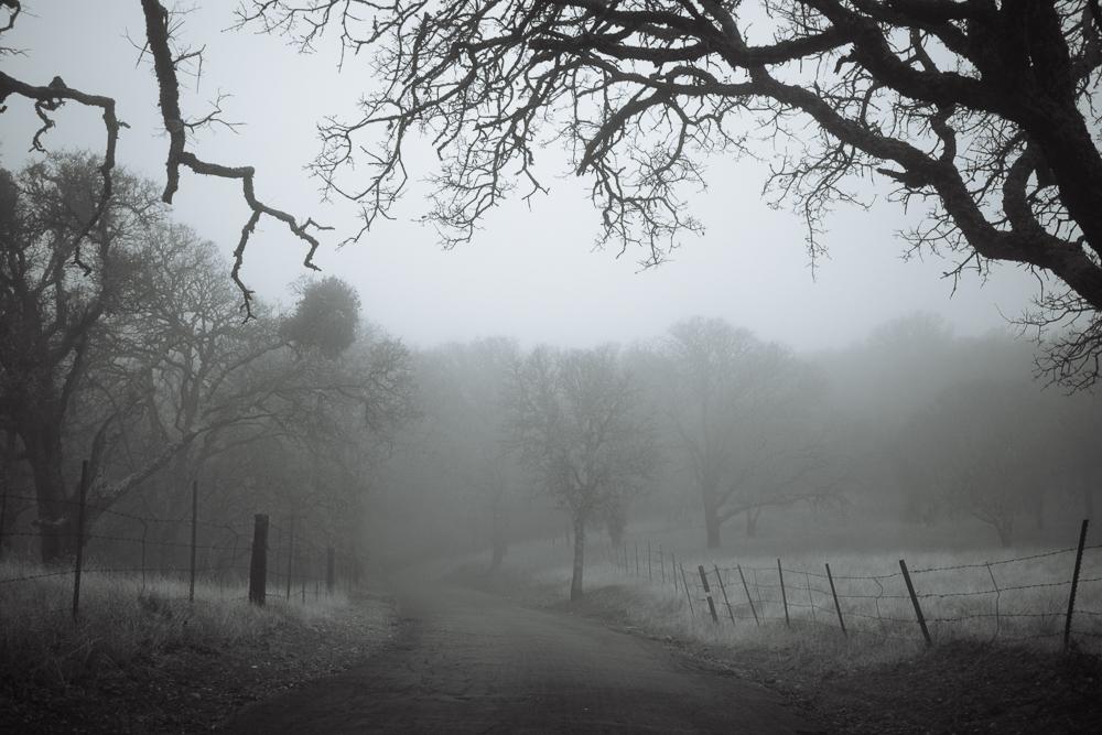 foggyday-4.jpg