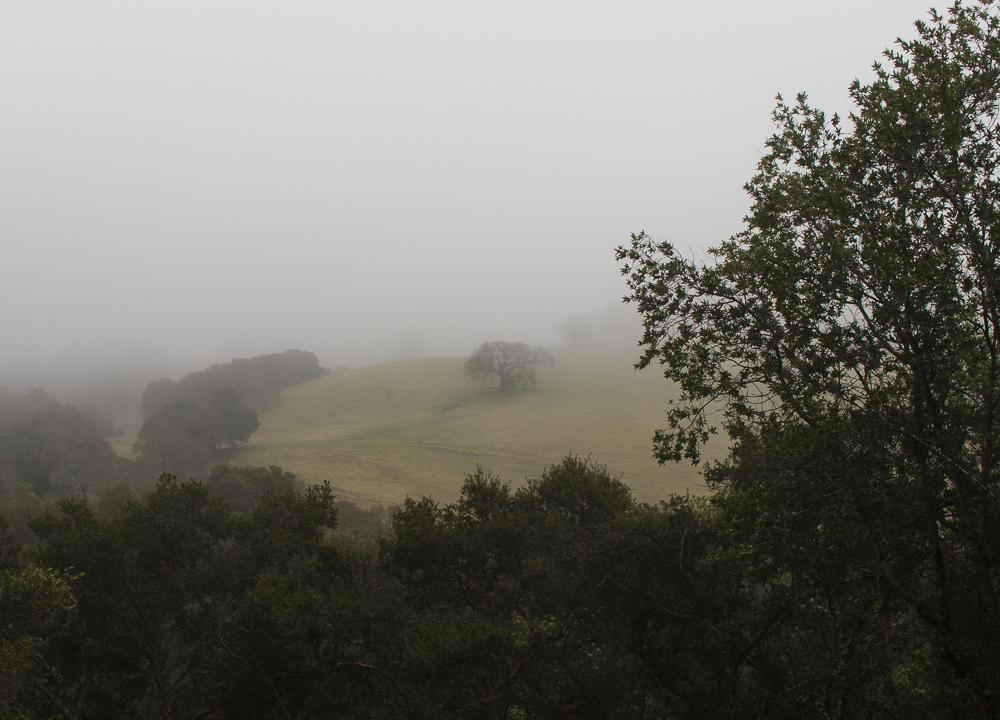 foggyday-6.jpg