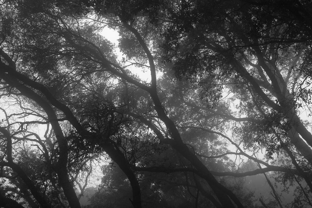 foggyday-8.jpg