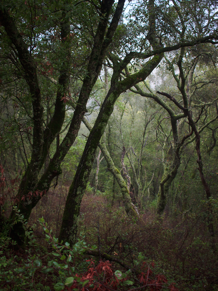 foggyday-9.jpg