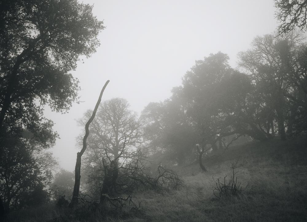 foggyday.jpg