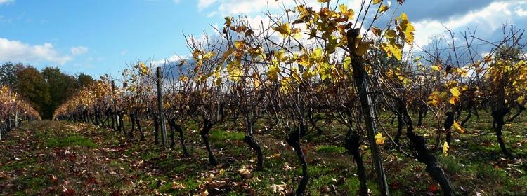 Le Domaine de Ravignan -