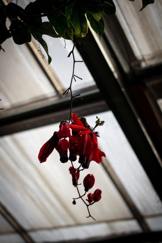 small_1_idasuhr_blomst_web.jpg