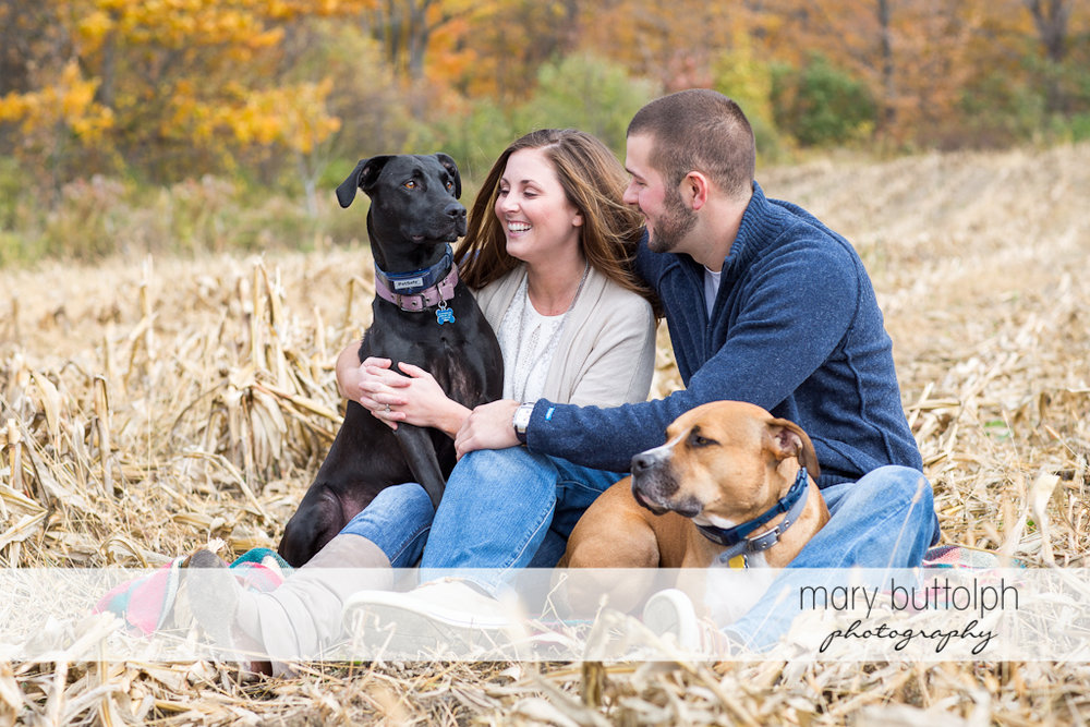 Couple relax in the field with their pet dogs at Skaneateles Engagement