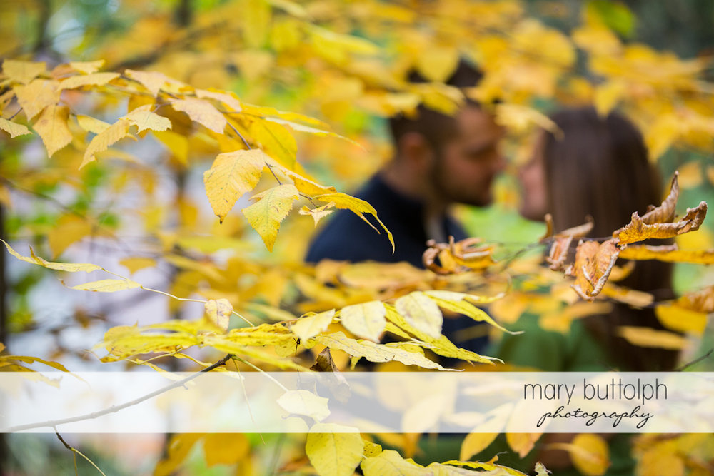The leaves of the tree partly cover the couple at Skaneateles Engagement