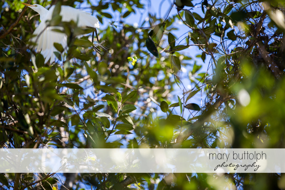 Leaves of the trees cover the sun at Sanibel Island Vacation