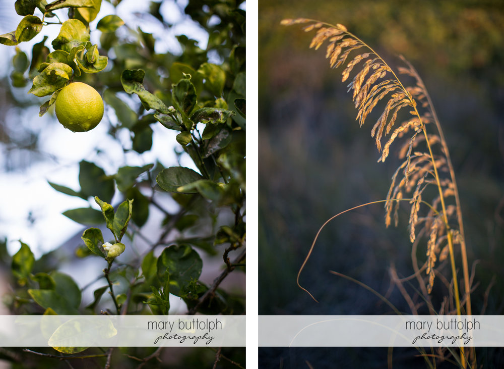 Fruit dangles from a tree and plants in the garden at Sanibel Island Vacation