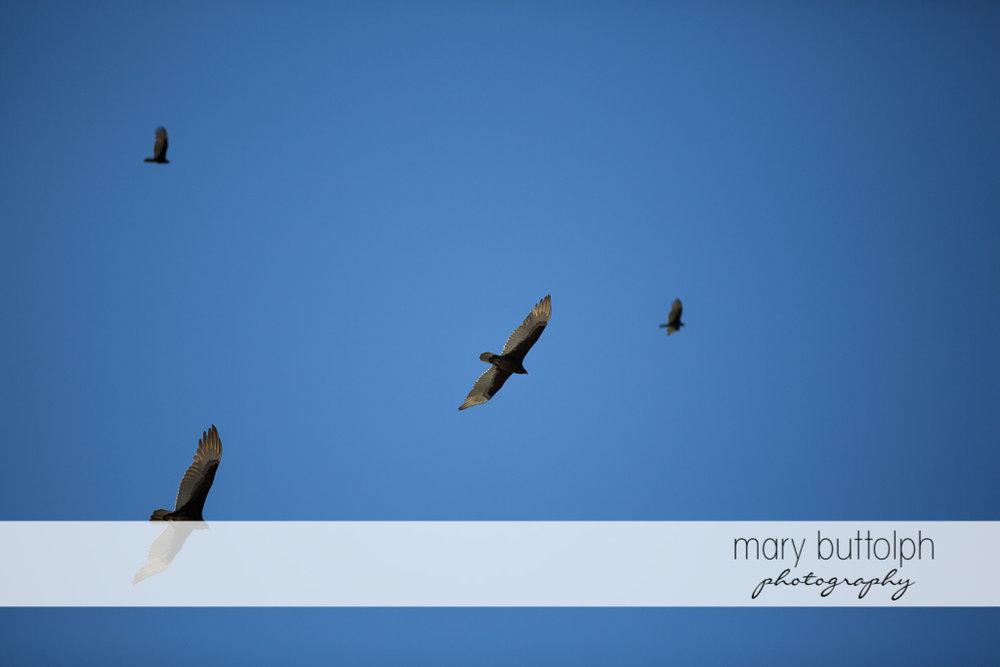 Birds in the sky at Sanibel Island Vacation