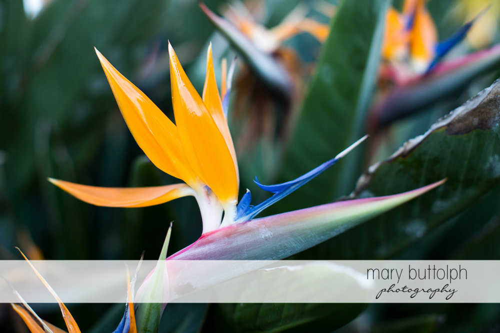 Colorful flowers in the garden at Sanibel Island Vacation