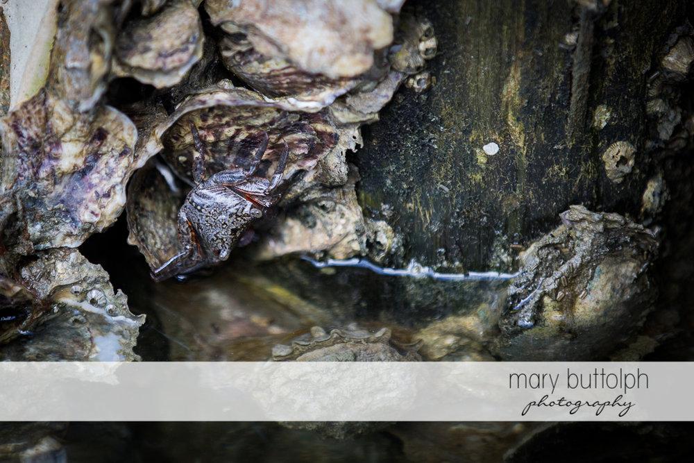 Close up shot of barnacles at Sanibel Island Vacation