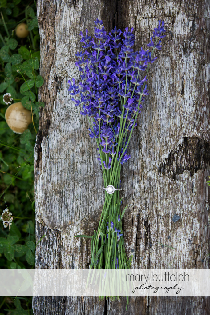 Lavenders decorate a tree at Lockwood Lavender Farm Engagement