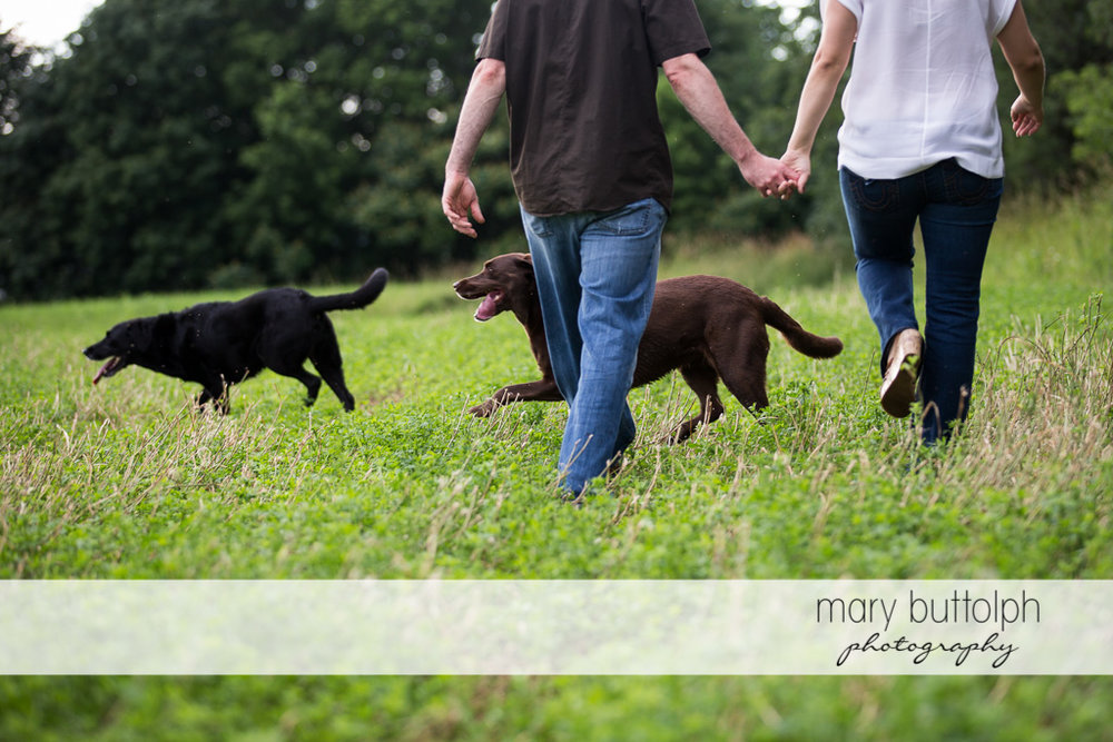 Couple cross the field with their two pet dogs at Lockwood Lavender Field Engagement
