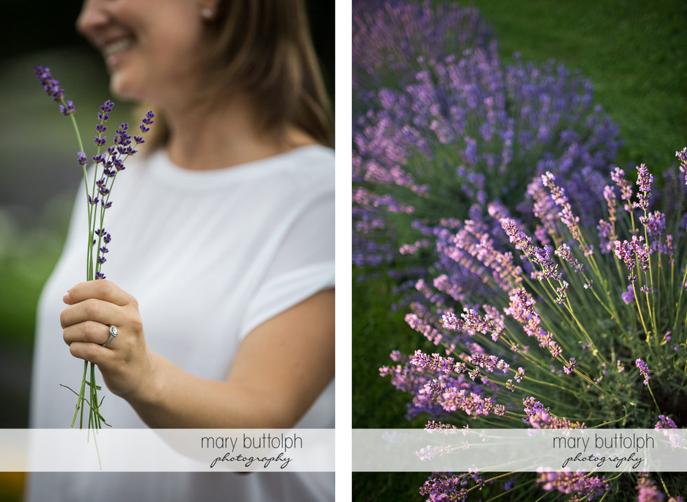 Woman holds some lavenders while others grow in the field at Lockwood Lavender Farm Engagement
