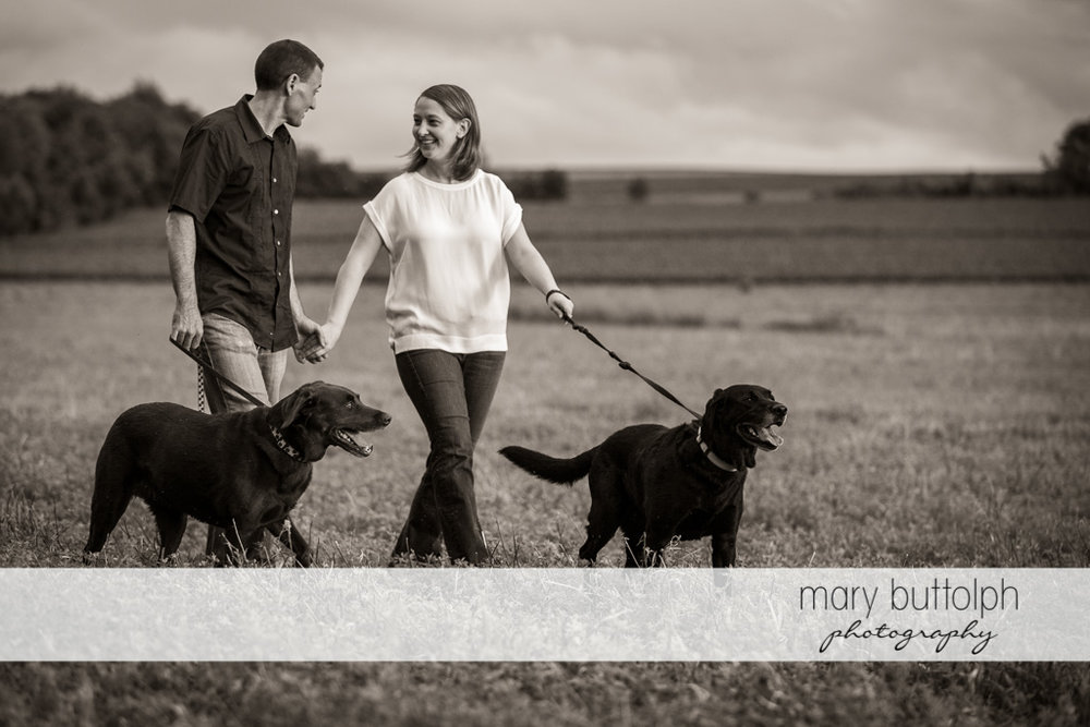 Couple stroll in the field with their pet dogs at Lockwood Lavender Farm Engagement