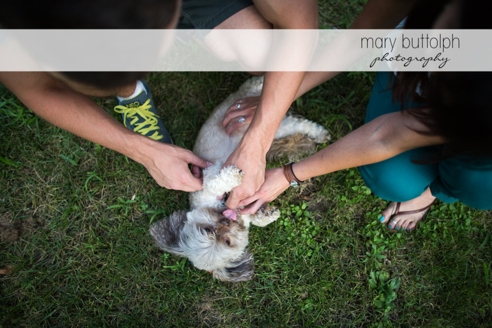 Couple play with their dog in the grass at Skaneateles Lodge at Welch Allyn Engagement