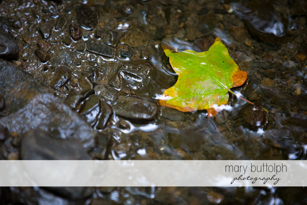 A leaf floats in the brook at Skaneateles Lodge at Welch Allyn Engagement