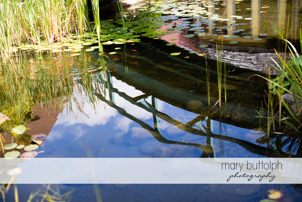 Mary Buttolph Photography