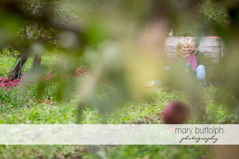 Couple seen through the leaves of an apple tree at Beak & Skiff Apple Orchards Engagement