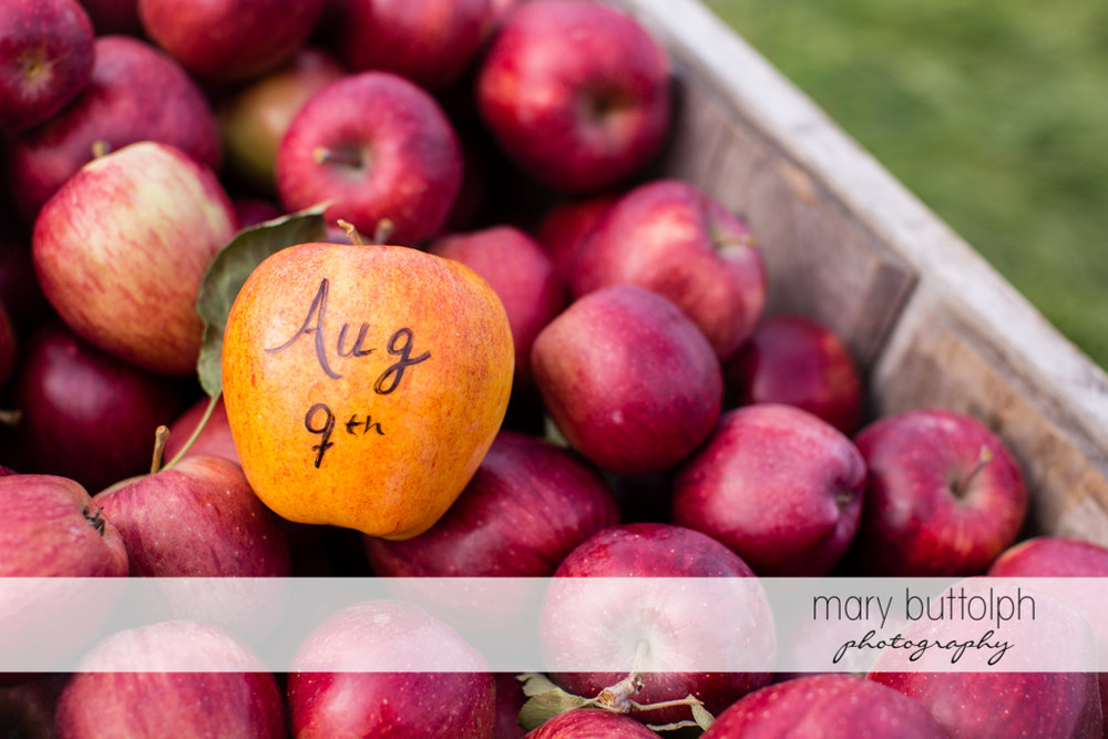 Couple's wedding day is written on this apple at Beak & Skiff Apple Orchards Engagement