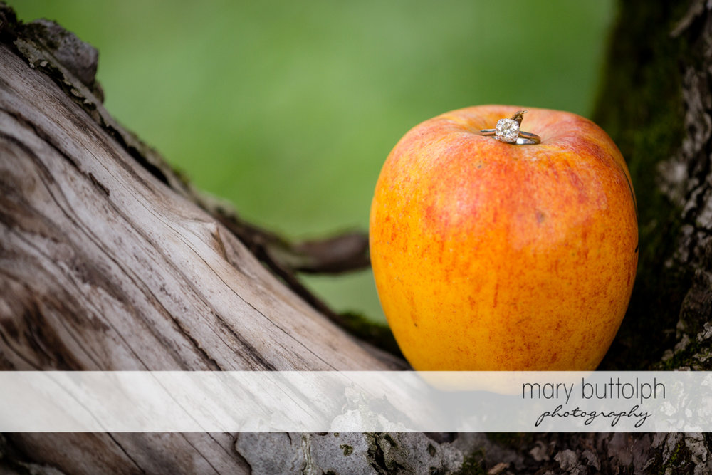 Close up shot of apple on a tree at Beak & Skiff Apple Orchards Engagement