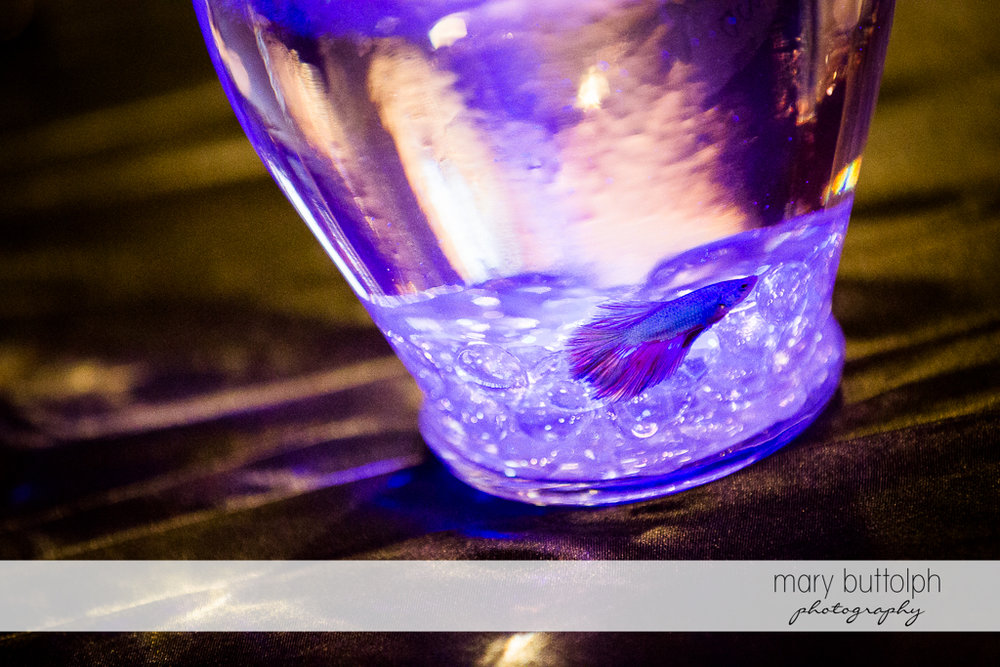 Colorful fish bowl at the wedding venue at Arrowhead Lodge Wedding