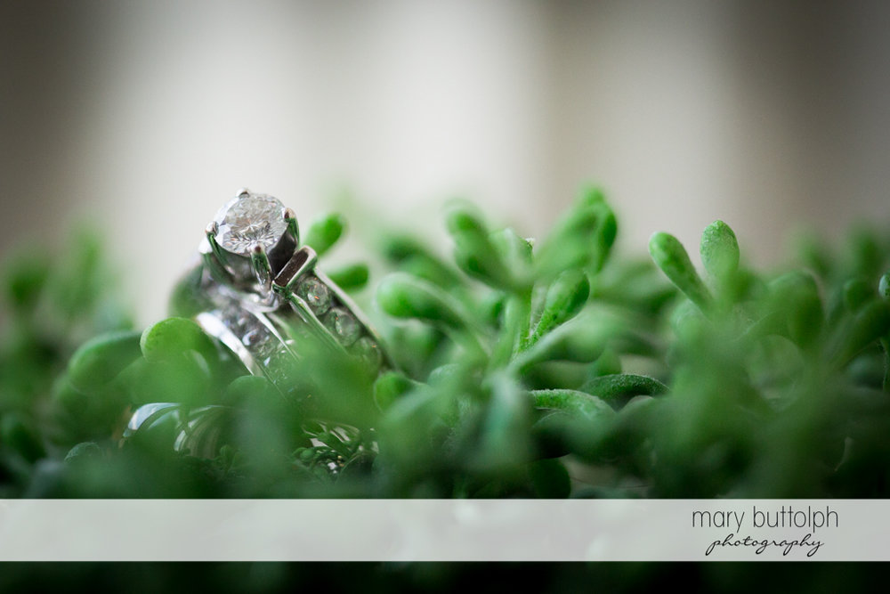 Couple's wedding rings on top of succulents at the Inns of Aurora Wedding