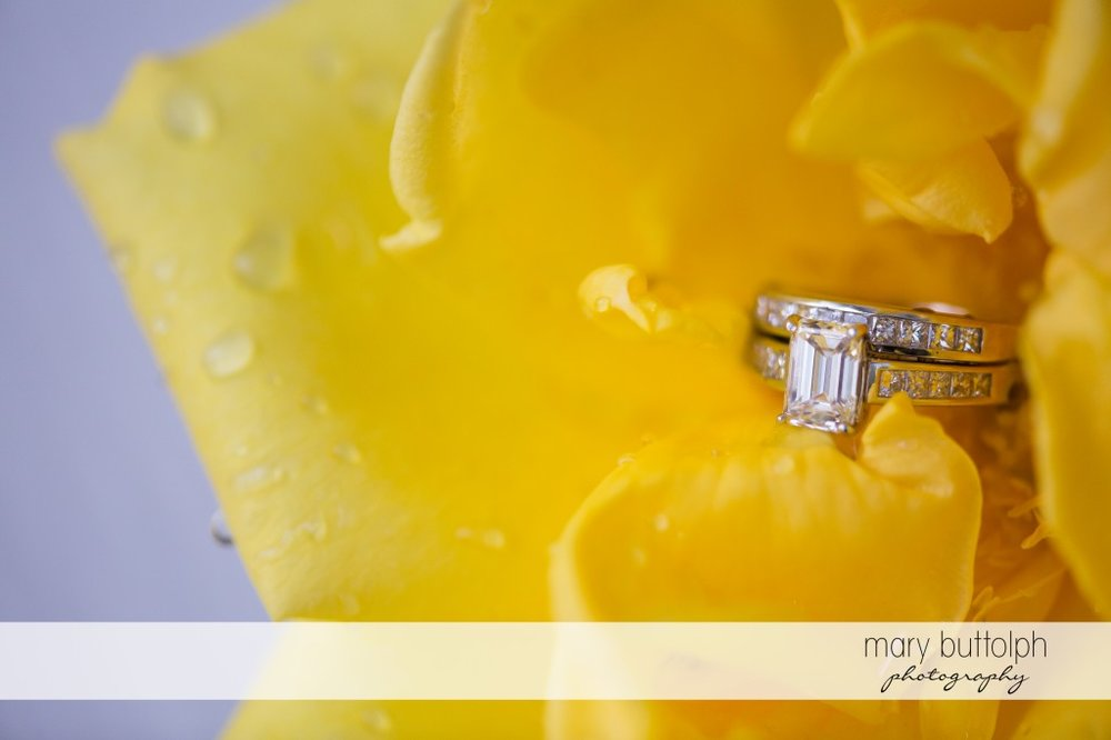 Couple's wedding rings in a yellow flower at Emerson Park Pavilion Wedding