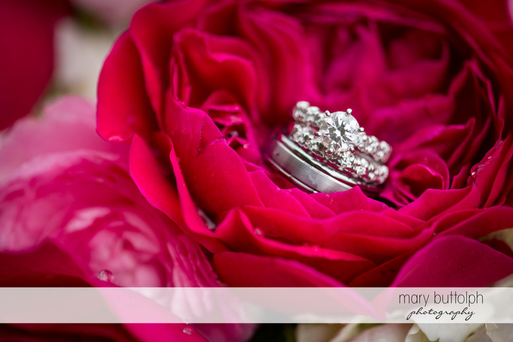 The couple's wedding rings on top of a flower at the Inns of Aurora Wedding