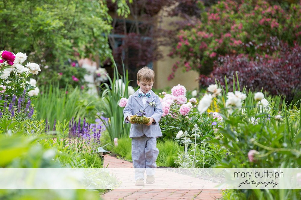 The ring bearer in the garden at the Mirbeau Inn & Spa Wedding