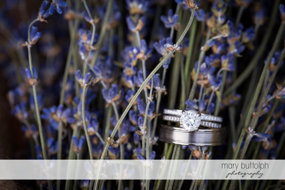 Lavenders hold couple's wedding rings at the Sherwood Inn Wedding