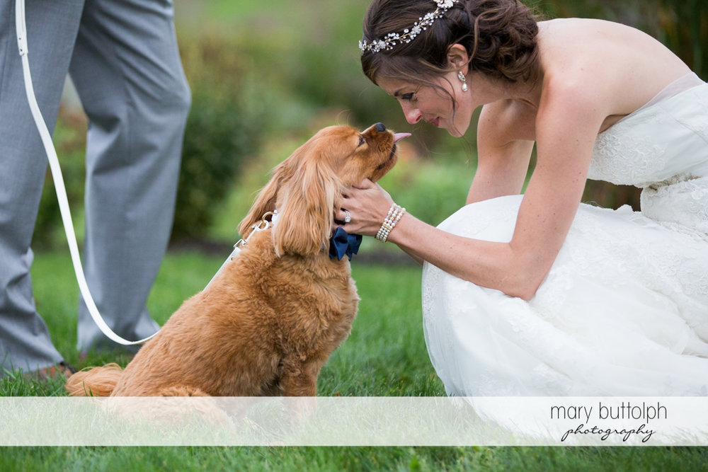 Bride greets her pet dog in the garden at Anyela's Vineyards Wedding