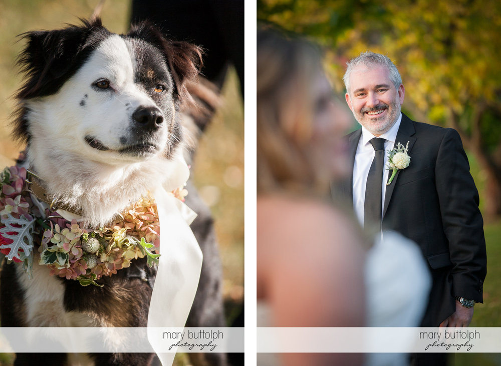 Close up shot of the couple's pet dog and the groom at the Inns of Aurora Wedding